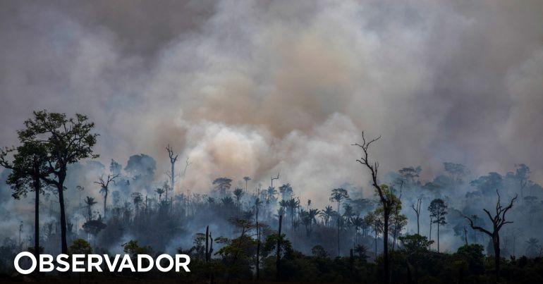 Governo brasileiro proíbe queimadas em todo o país. Decreto-lei prevê proibição durante 60 dias