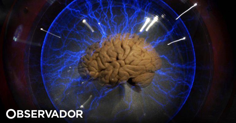 Acabar com os mitos: usamos o cérebro todo – Observador